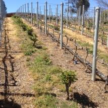 Loma Larga Vineyard, Casablanca Valley Chile