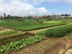 Tra Que Village - Vietnam Culinary Discovery