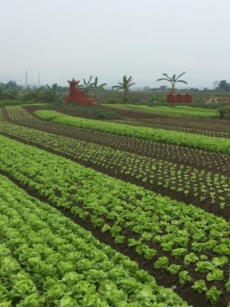 Market gardens, Vietnam Culinary Discovery