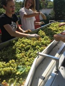 Wine tasting at Matosevic winery - Real Food Adventure Slovenia and Croatia
