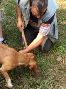 Truffle hunting - Real Food Adventure Slovenia and Croatia