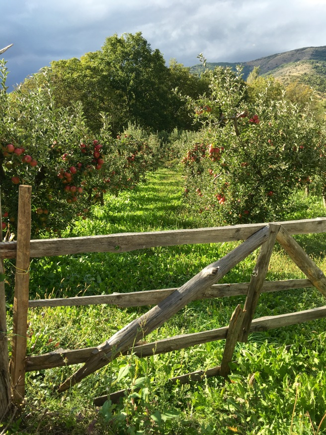 Apple orchards in the Resen region - Real Food Adventure Macedonia and Montenegro