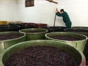 Making wine at Njegusi - Real Food Adventure Macedonia and Montenegro